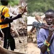 Presidency and Ondo Government Trade Words Over the Latter's Ultimatum to Herdsmen to Quit Forests