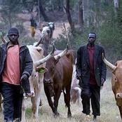 Herdsmen burn farmlands, destroy produce worth millions of Naira - Read reactions of farmers.