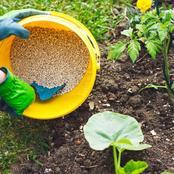 Fertilizer Options For Your Vegetable Garden
