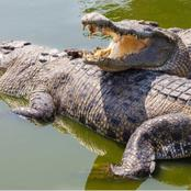 Intriguing facts about crocodiles