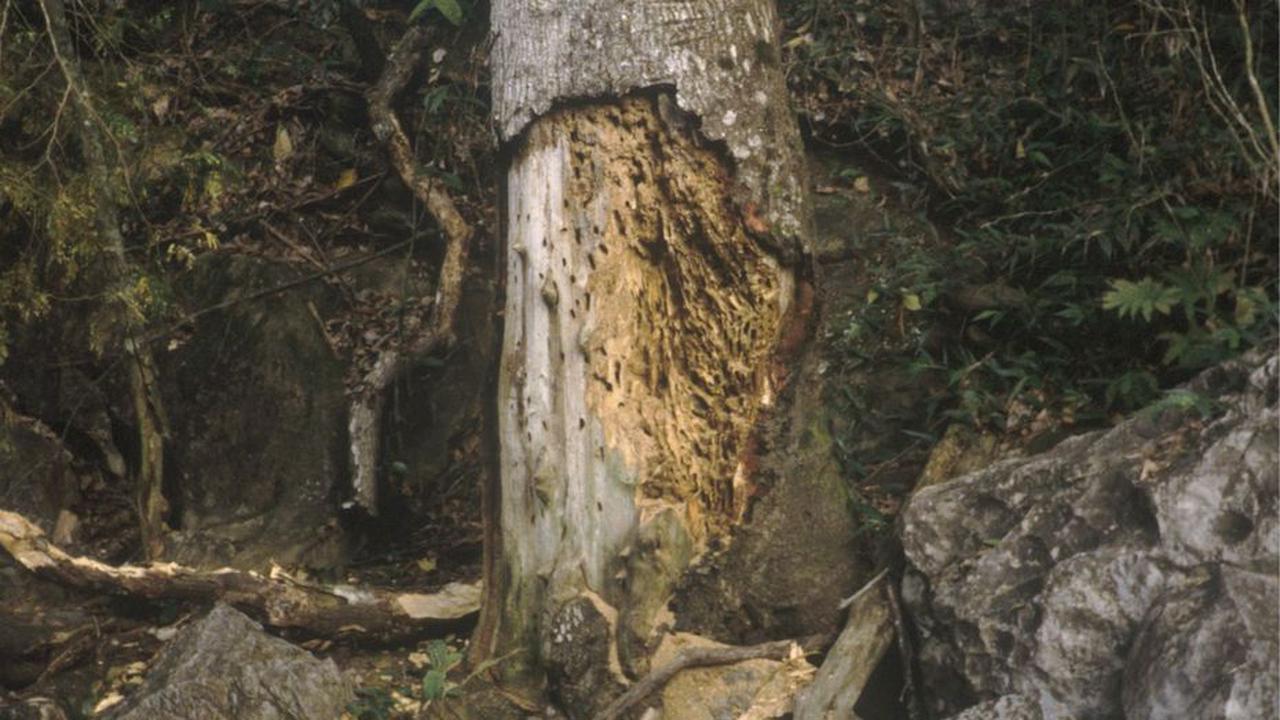 Les termites sont de retour, avec un peu d'avance
