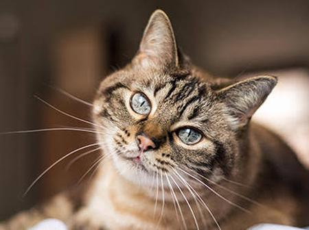 Do You Wanna Know The Secret Behind Your Pet Cat Always Staring At You? Read More To Find Out