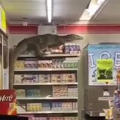 Horrifying - Gigantic 'Monitor Lizard' Found In A Supermarket Climbing Shelves