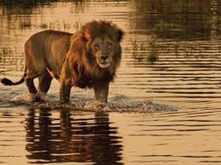 African Safaris boast spectacular wildlife