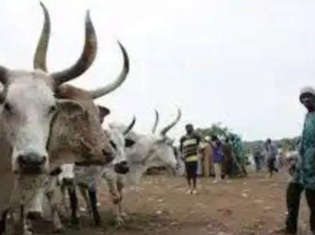 Names Of Fulani Cow Owners To Be Inscribed On Their Cows To Identify Erring Herdsmen