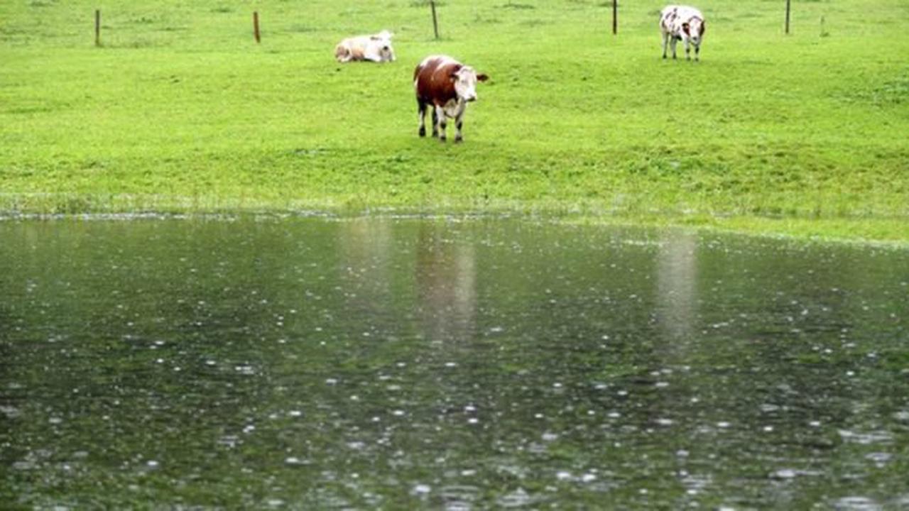 """""""Trotzt mit Hintern dem Sturm"""": Was Vieh bei Unwetter macht"""