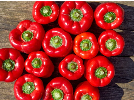5 Foods That Can Help Boost Your Immune System