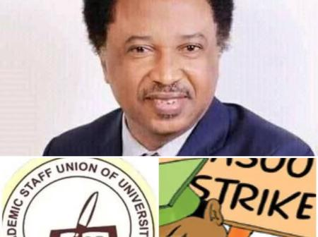Shenu Sani's Reacts To ASUU Calling Off Strike After Many Months