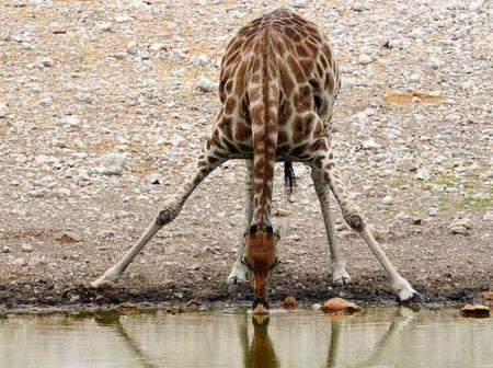 Check out the animal that can survive without water for 21 days (photos)