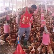 L'élevage de poulets : voici l'autre grande passion de Serey Dié dévoilée