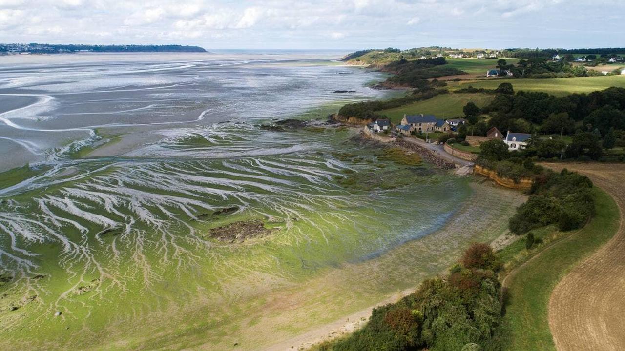 Bretagne. Des élus de la Région réclament un «grand débat» sur les algues vertes