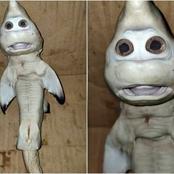 في اندونيسيا: سمكة قرش لها وجه انسان تثير الجدل والاختلاف بين العلماء