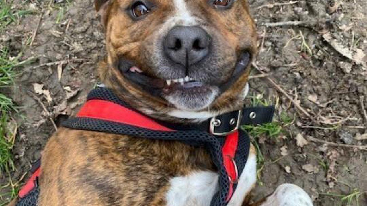 Look at his smile! Can you give Razzy a loving home?