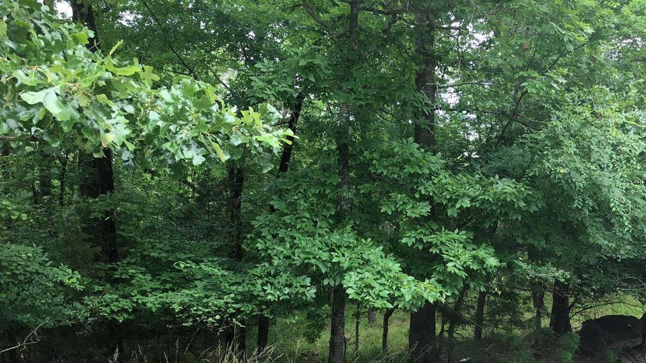 Body found near logging trail in Clay County