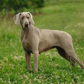 Top 10 World's Most Expensive Dog Breeds (Photos)