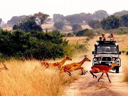 Beautiful Pictures of the queen elizabeth national park in uganda