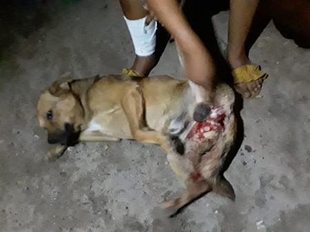 The owner of the dog that was brutally stabbed by two men wants justice see pictures