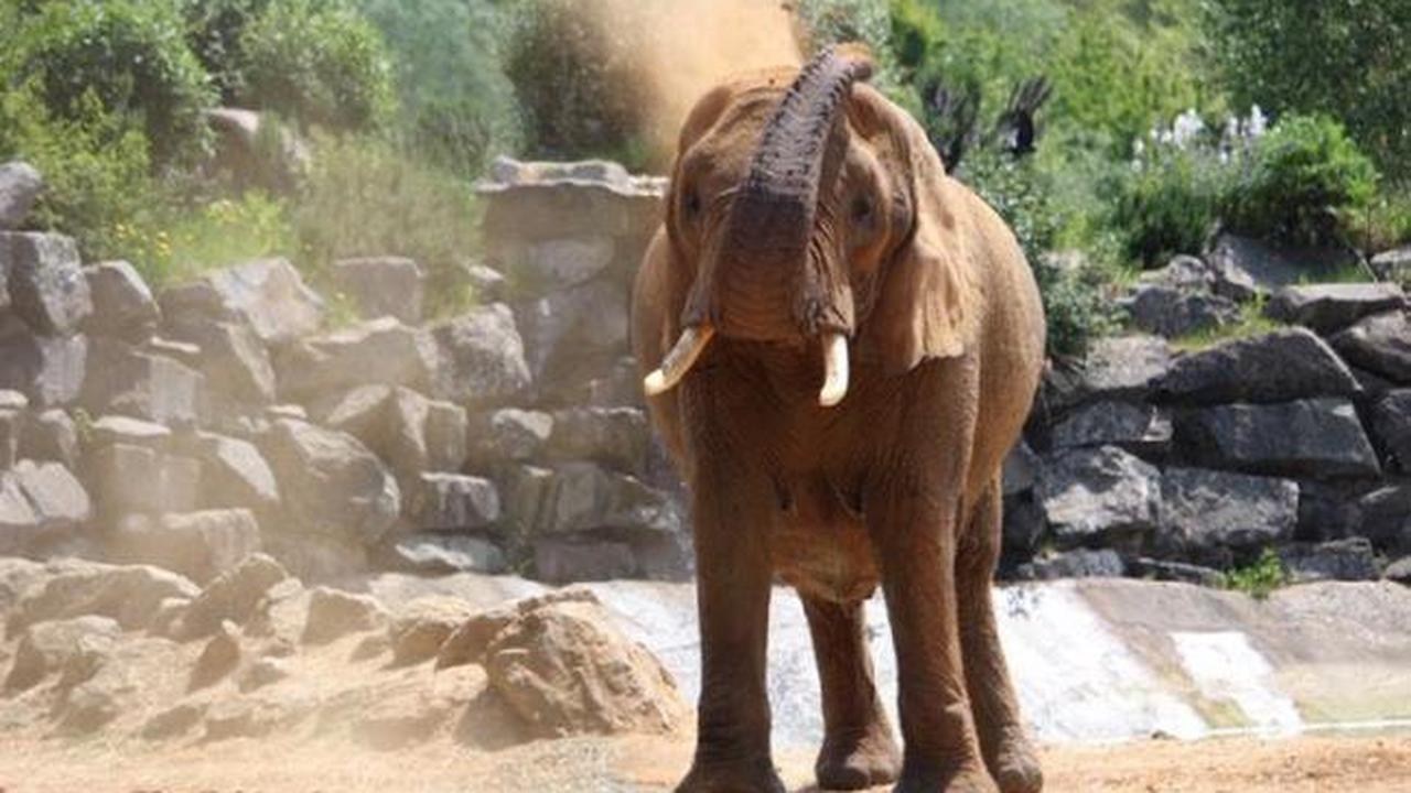 The ten Covid rules to keep you safe when visiting Colchester Zoo