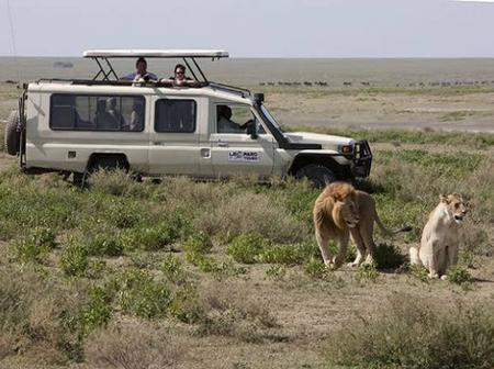 Why Lions Do Not Attack When You Are in a Safari Vehicle