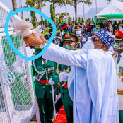 Stop Blaming President Buhari, Read What Could Have Made The Pigeon Not To Fly When He Released It
