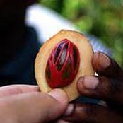 هذه الثمرة حرمت دار الإفتاء أكلها إلا بشروط معينة .. فما هي ؟ ولماذا تم وضع ضوابط لأكلها ؟