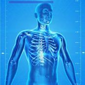 Sciences : des faits étonnants sur le corps humain