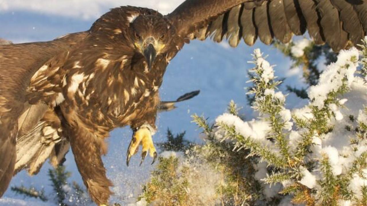 The best places to see Scotland's famous wildlife