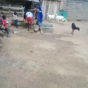 Divo: les populations s'adonnent à l'élevage à domicile