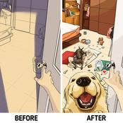 11 Comic Illustration Of What Life Is Like, Before And After Having Pets In Your Home