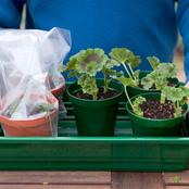 Tips To Propagate The Best Plants In your Garden With Ease