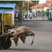 KDF Wants Sales Of Kenya Meat To Be Halted