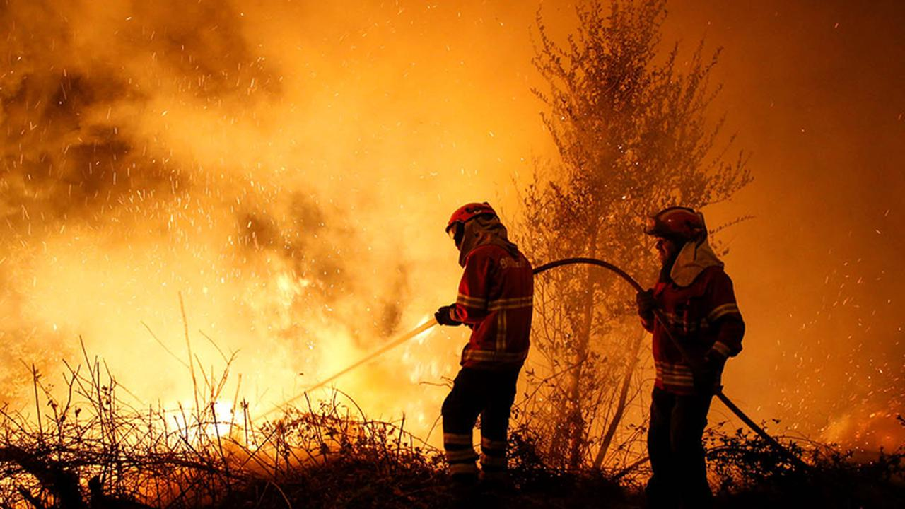 Forest fires in Chile consume over 3,200 hectares