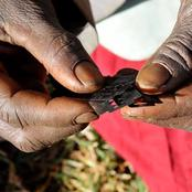 Infibulation, The Worst Form of Female Genital Mutilation
