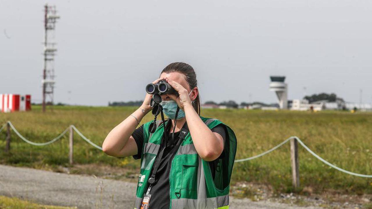 Pau: l'aéroport est aussi un refuge pour la biodiversité