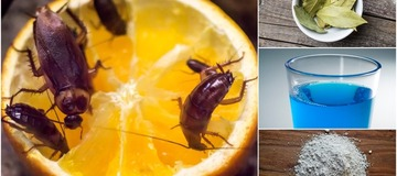 Stop wasting Money on Insecticides, See 16 Ways to Get Rid of Cockroaches Without Spending Much