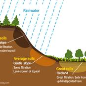 Biological factors that contribute to soil formation