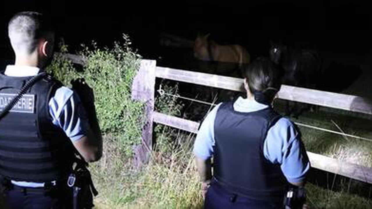 Chevaux mutilés. Comment les gendarmes ont enquêté en Ille-et-Vilaine ?