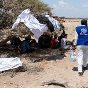 IOM: Dozens of African migrants thrown overboard by smugglers and feared dead