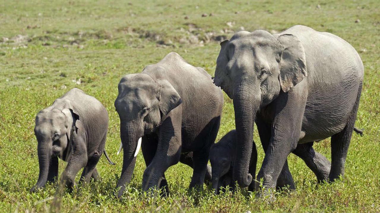 Herd of 18 Indian elephants die when forest struck by lightning