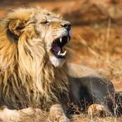 See The Bird That Can Roar Louder Than A Lion, Kill A Lion And Run Faster Than A Horse.