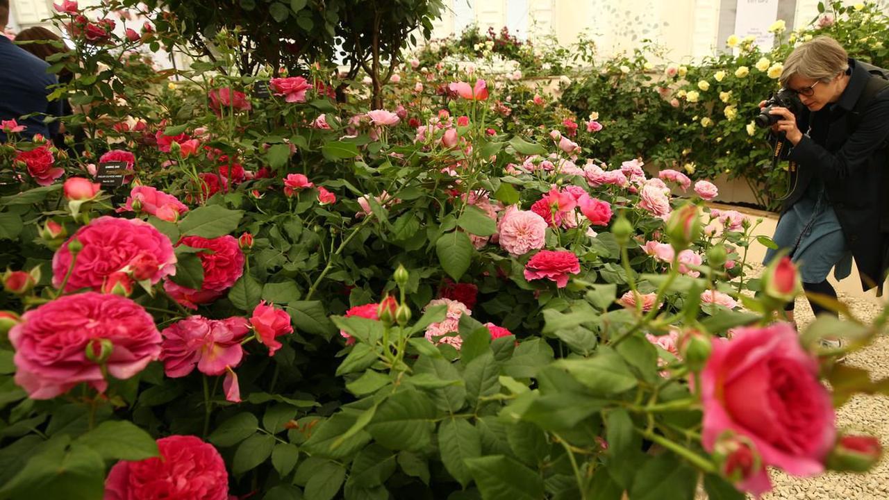 'Virtual' Chelsea Flower Show takes place again to fill gardening calendar gap