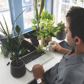 2 Key Important Roles Plants Play In Your Workplace That You Dont know