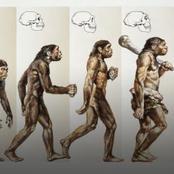 The evolution of human