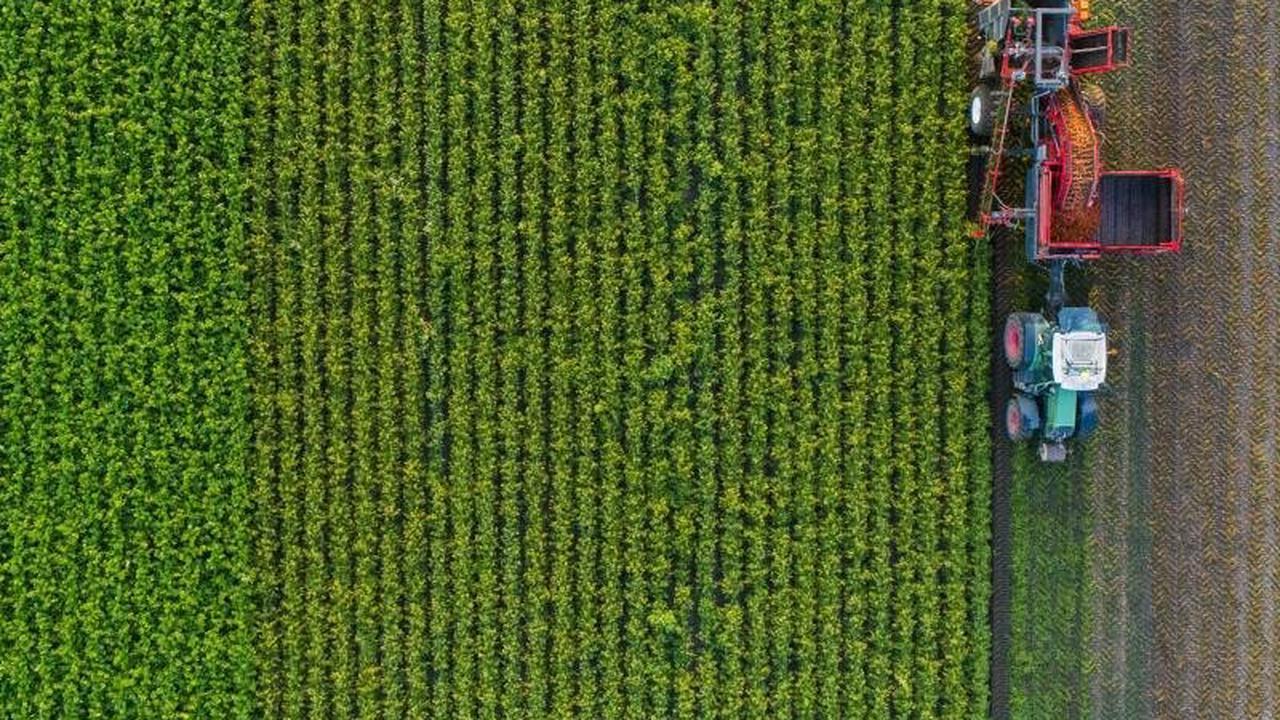 Es grünt so grün: Das müssen Sie als Anleger über nachhaltige Investments wissen