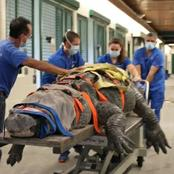 See the moment a 600 pounds alligator was taken to the veterinary clinic in Florida (Watch videos)