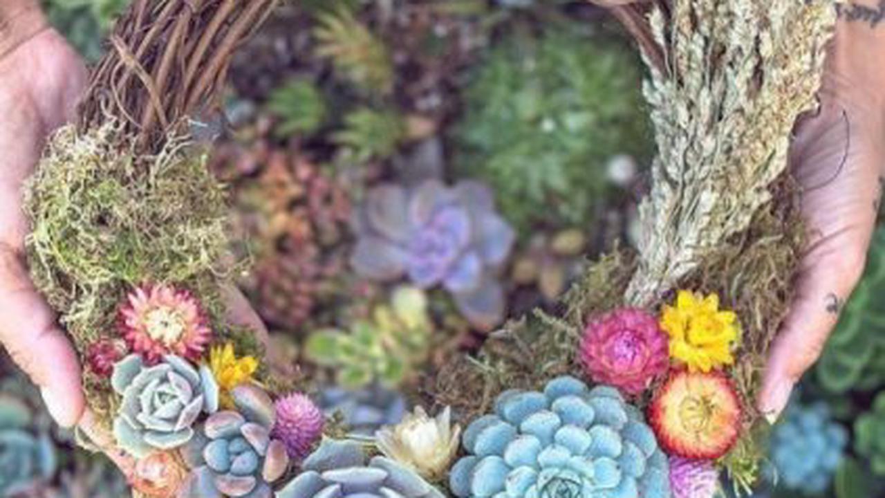 15 comptes Instagram à suivre pour les amoureux de plantes d'intérieur