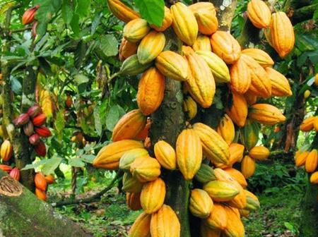 Economie nationale : la Côte d'Ivoire en voie de perdre un pilier économique important