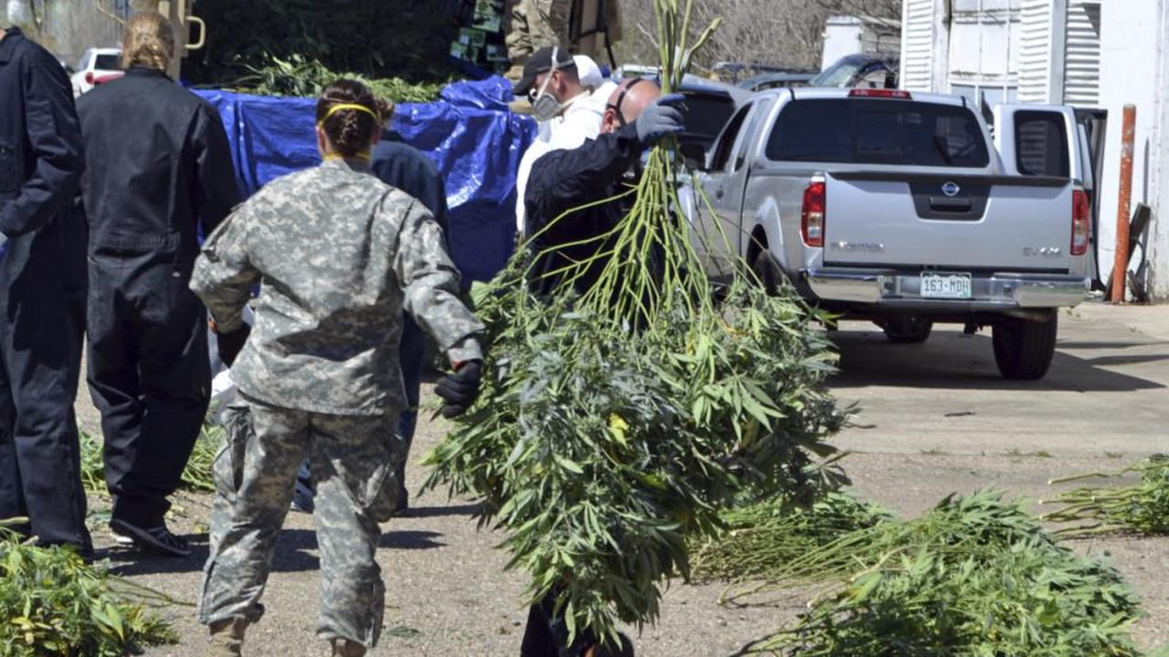 Overwhelmed by illegal weed, Oregon County declares state of emergency