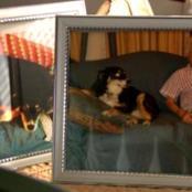 A dog was left with 72million dollars inheritance