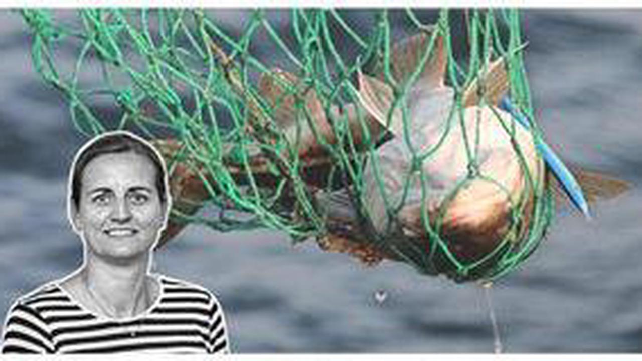 Packt die Angeln ein – das Fangverbot für Hobbyangler ist richtig!